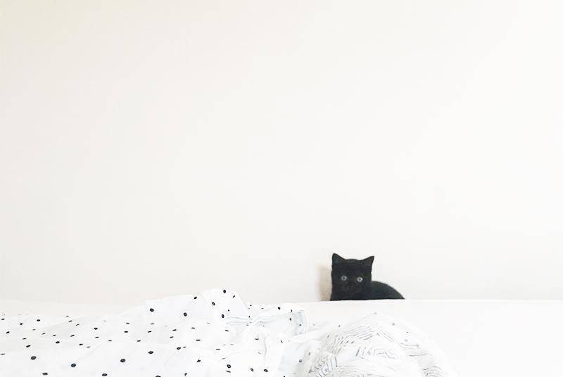 Schwarze Katze sitzt auf Bett, weiße Bettwäsche mit schwarzen Punkten.