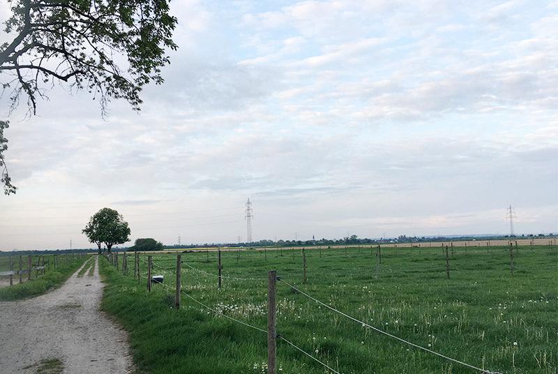 Feldspaziergang in Libur, 51147 köln-Libur
